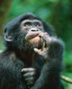 macaco-pensando